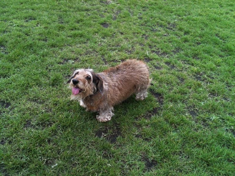 dog walker camberwell
