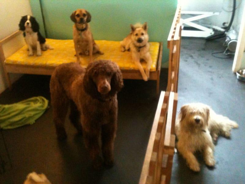 dog day care Camberwell
