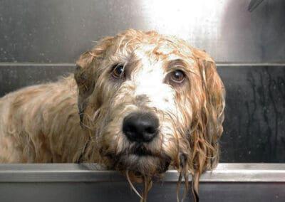 dog grooming camberwell