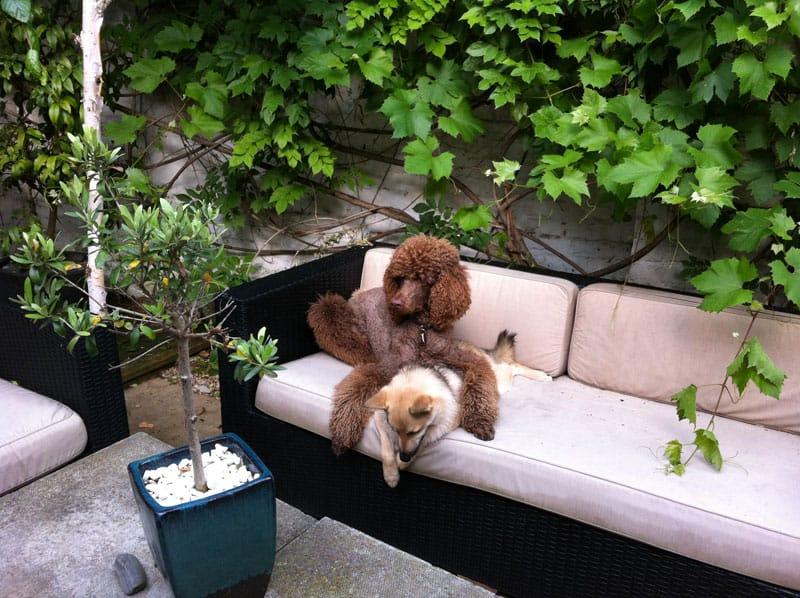 dog boarding camberwell